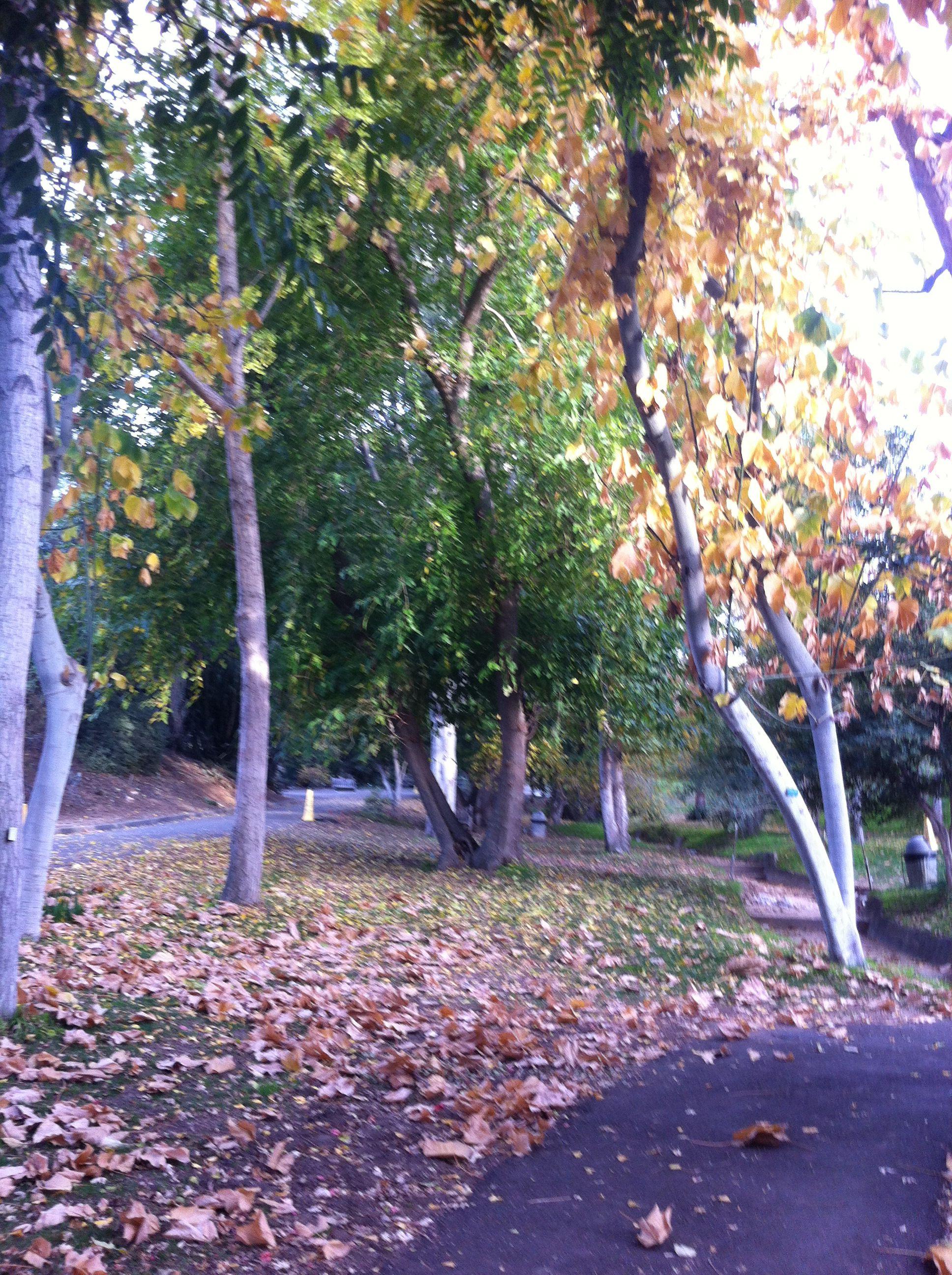 Ucr Botanical Garden Botanical Gardens Nature Riverside