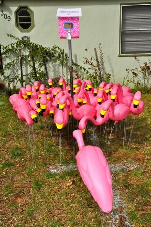 We had meant to swing by and see what the Laurel St. flamingos where up to on Valentine's Day but missed the opportunity. Finding ourselves right down the street from the flock this morning, we swung by to see if President's Day had them in a patriotic mood. It didn't appear so, as they were [...]