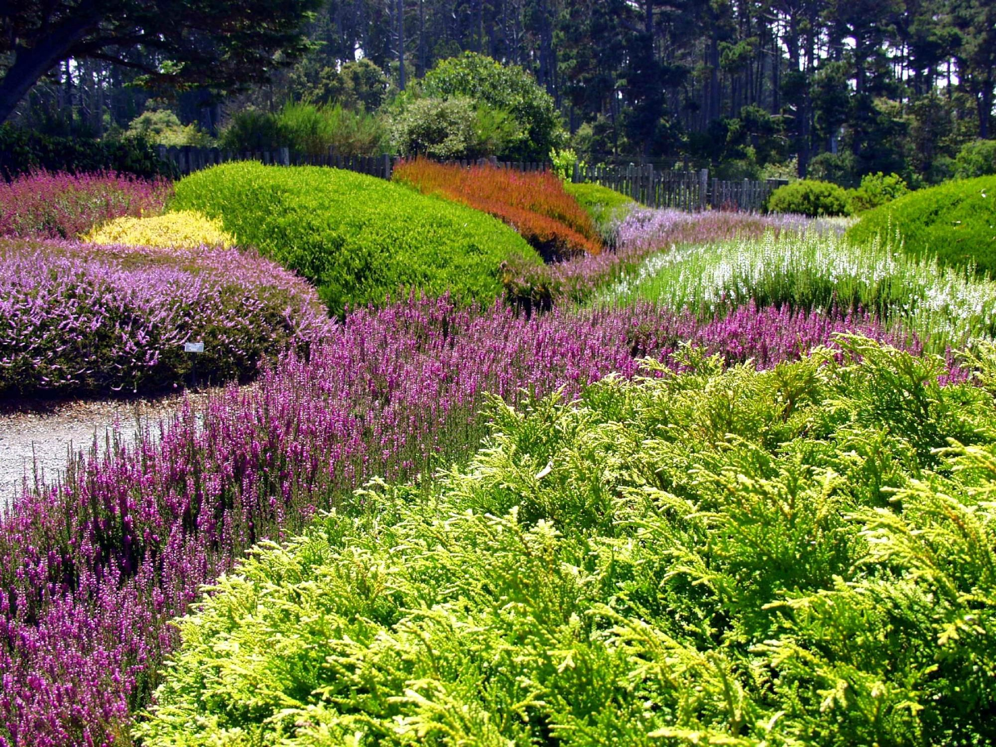 Mendocino Coast Botanical Gardens (Fort Bragg, CA): Hours, Address, Top
