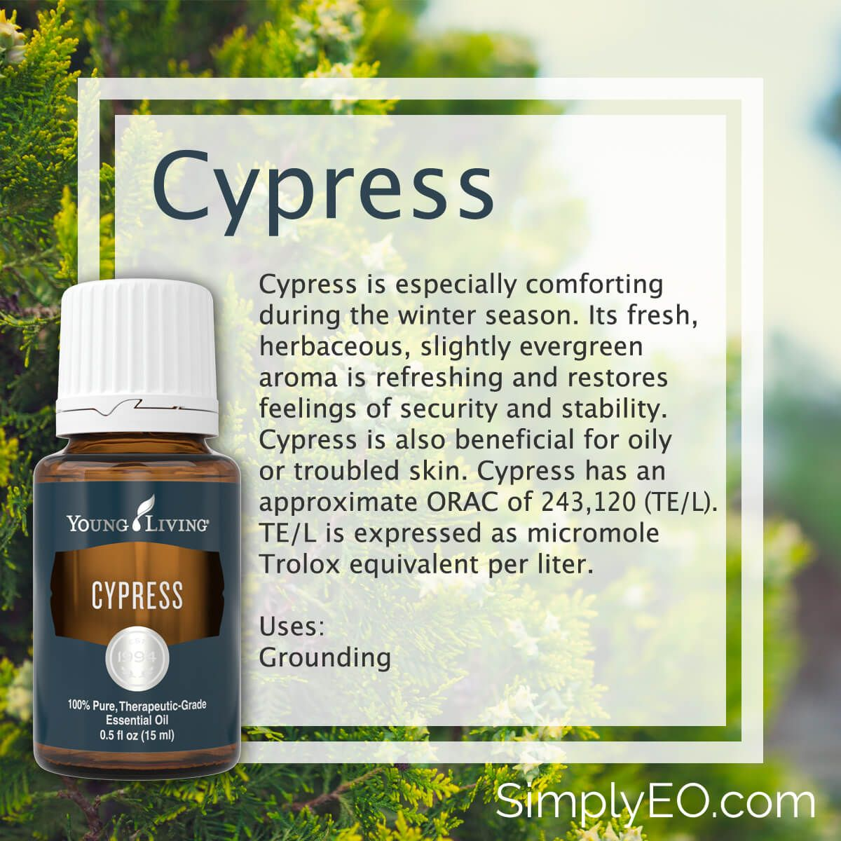 Doterra Nederland Cypress 15ml Essential Oil Young Living Aromatherapy