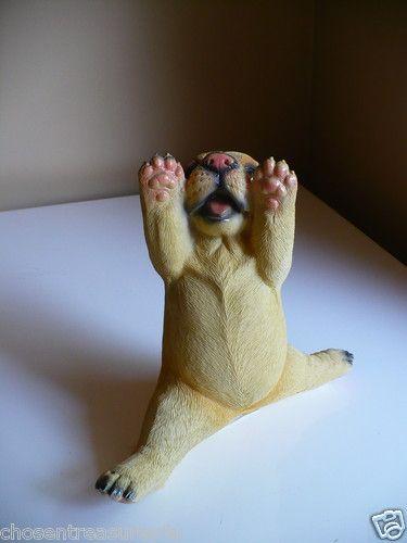 Yoga golden Lab. A cute little fellow, excellent gift