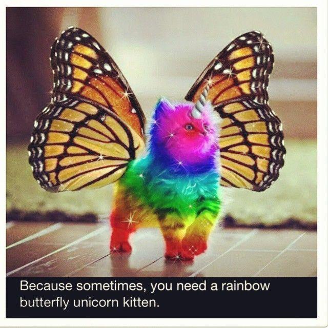 Rainbow Unicorn Kitten Meme - Google Search