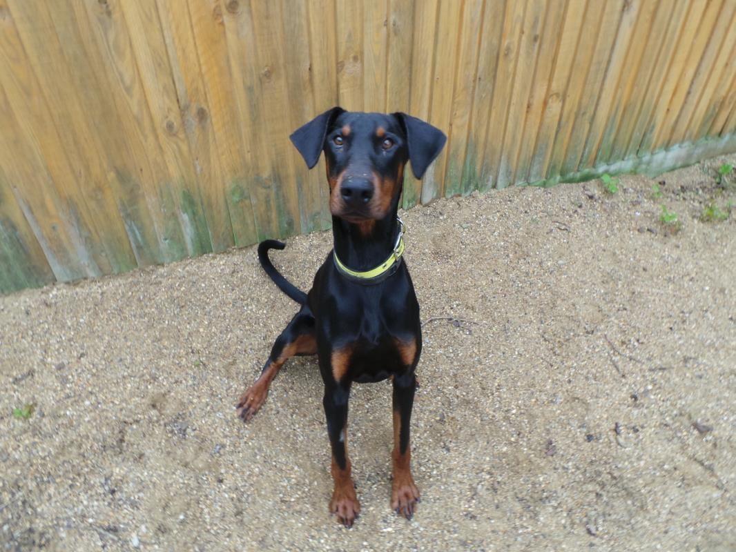 Boris Dogs Trust Dogs Rescue Dogs Dog Adoption
