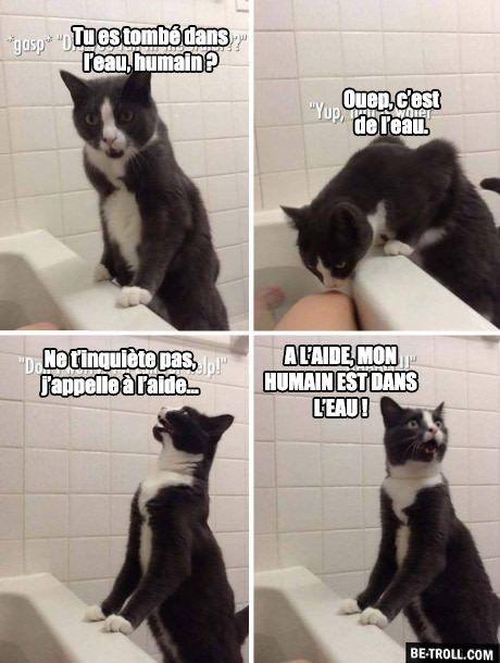 Les Chats Et L Eau Humour Animaux Chat Drole Animaux Droles