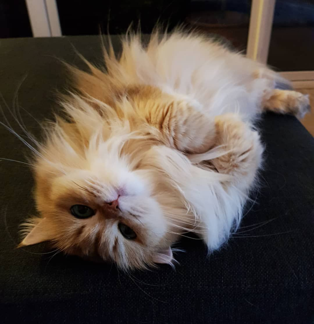 Smoothie The Catさんはinstagramを利用しています So Instagram Was Down This Is What You Ve Missed Pretty Cats Cats Animals Beautiful