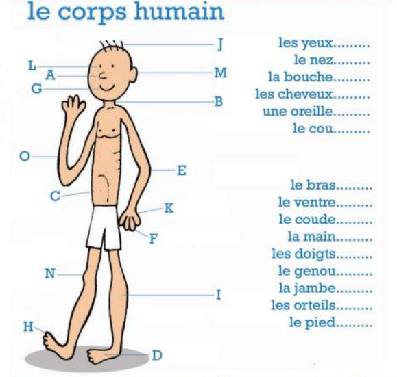le corps humain exercices