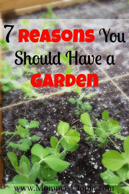 7 Reasons to Start a Garden