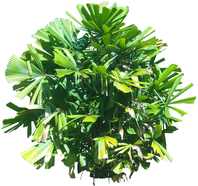 A Collection Of Tropical And Subtropical Plant Images With Transparent Background Plant Images Plant Pictures Tropical Plants