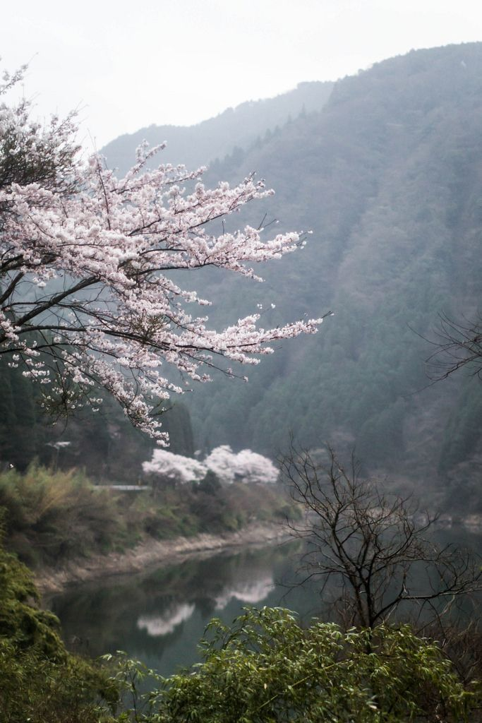 Local Milk | wander | japan : kurokawa onsen photography retreat