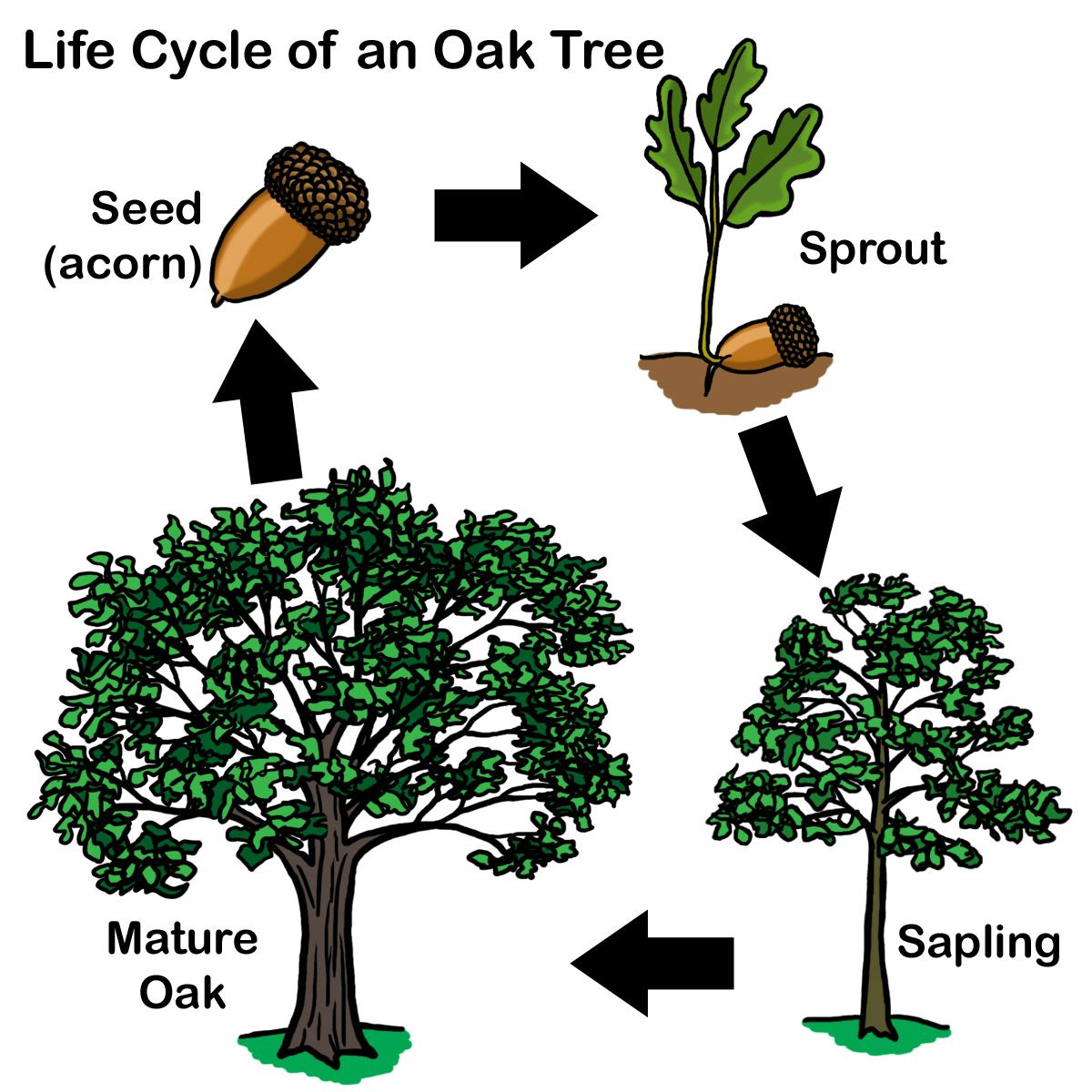 aisdprekshare tree homes unit resources kindergarten