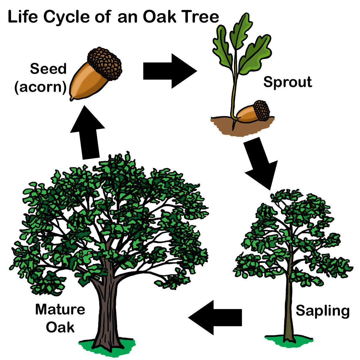 aisdprekshare tree homes unit resources kindergarten