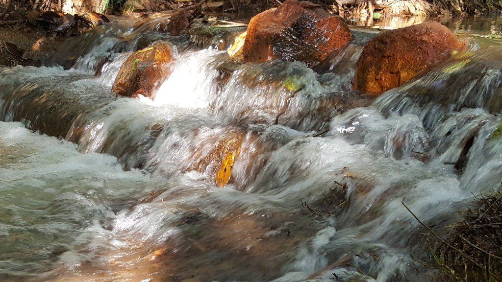 Reserva da Biosfera Corredor Ecológico Água Branca: leitos limpos e floresta de…