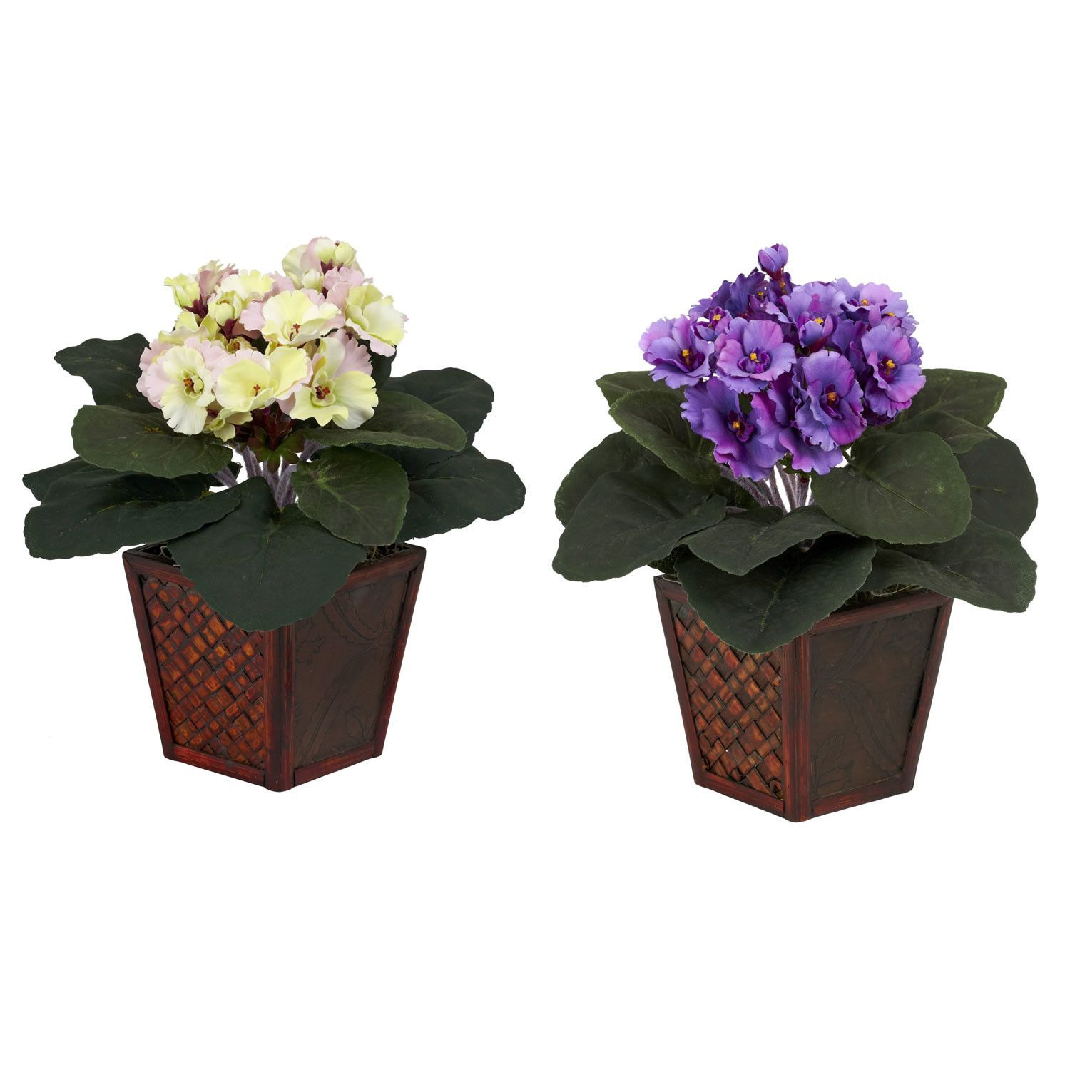 African Violet Desk Top Plant in Pot 2 Piece Set