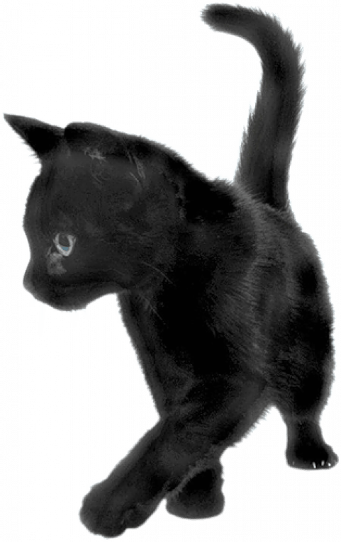 Black Cat PNG - Transparent Image Black Cat PNGGet to ...
