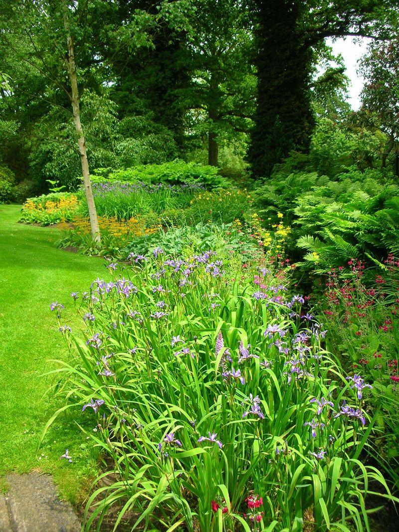 bog garden | The bog garden