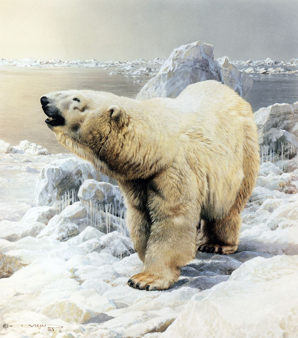 by polar season articles frosty jewellery fennell diamond theo the bear inspired enchanting winter