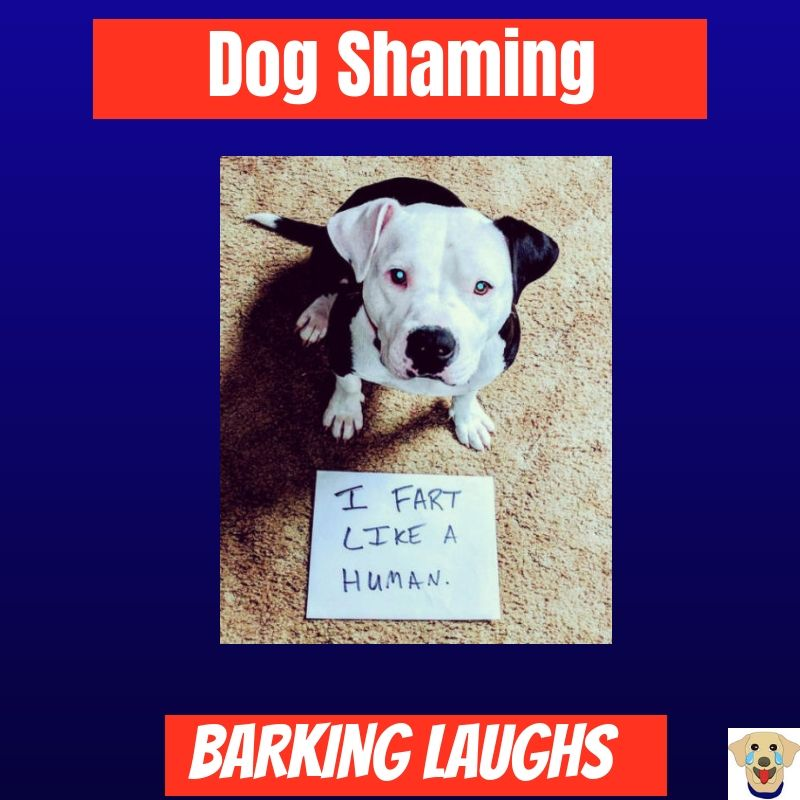 Barking Laughs Dog Shaming Board Cover Dog Shaming Pictures