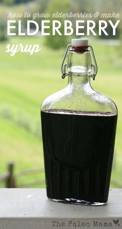 How to Grow Elderberries and make Elderberry Syrup - #elderberries #Elderberry #Grow #Syrup #elderberryrecipes
