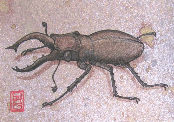 ACEO Stag Beetle  Archival Print of Original Ink by OniOniOniArt, $5.00