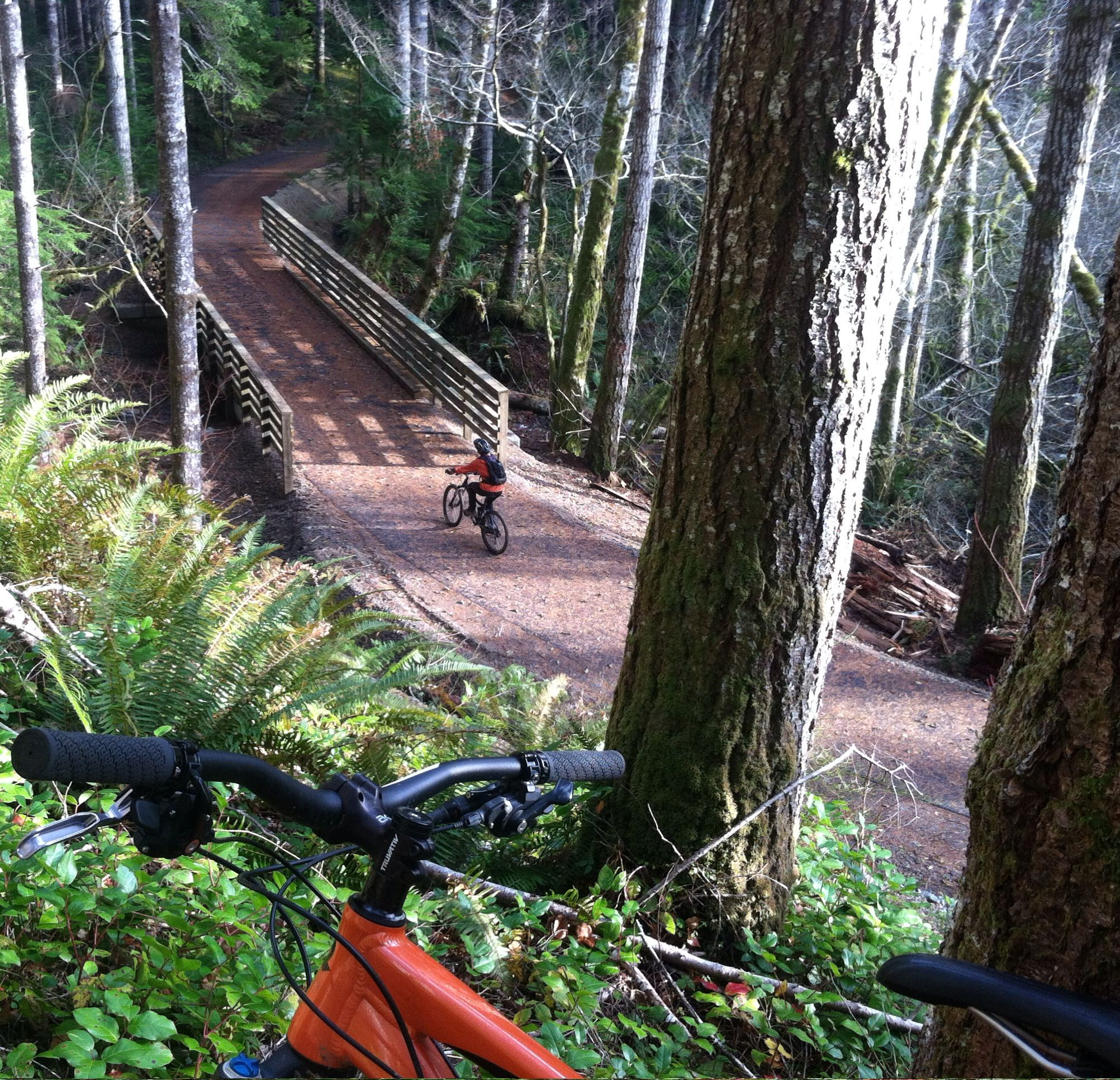 Biking The Paved Olympic Discovery Trail Near Lake Crescent In
