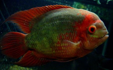 Big Community Fish