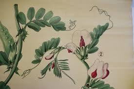 Oude Botanische Prenten : Afbeeldingsresultaat voor oude botanische schoolplaten