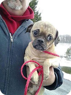 Lancaster Pa Pug Meet Benny A Dog For Adoption Kitten