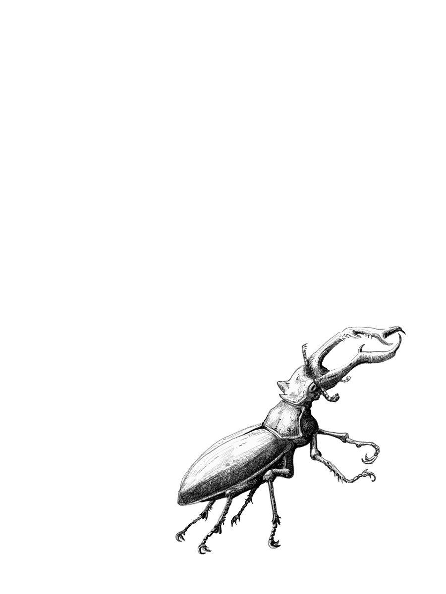 Hirschkafer Stag Bettle Schwarzweiss Black And White Illustration Zeichnung All Rights Reserved By Von Erika Www Hirschkafer Insektenkunst Augenmalerei