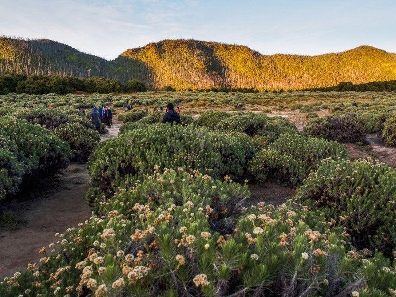 5 Tempat Terbaik Untuk Melihat Bunga Edelweiss Di Indonesia Wira Nurmansyah Pemandangan Indonesia Permukaan Laut
