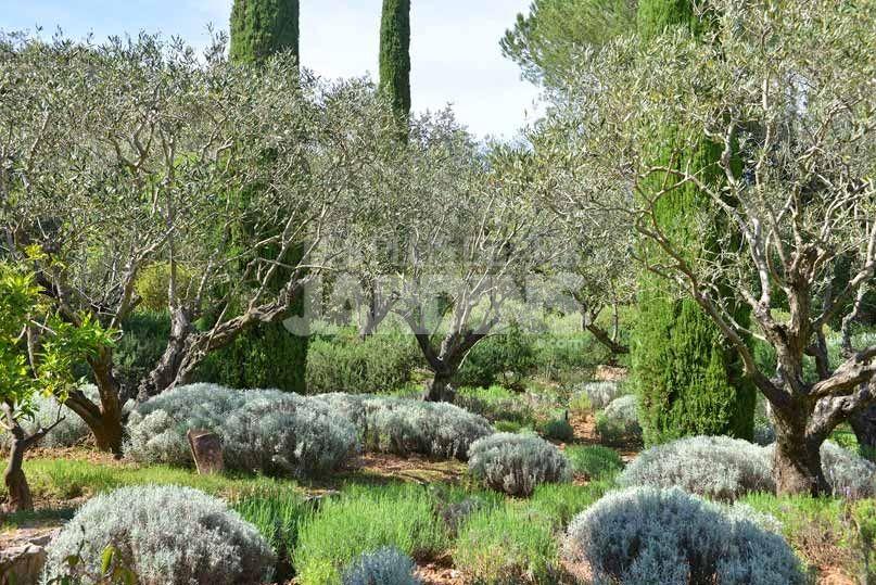 Jardin jean mus 2 paysagiste pinterest beaux jardins for Jardinier paysagiste herault
