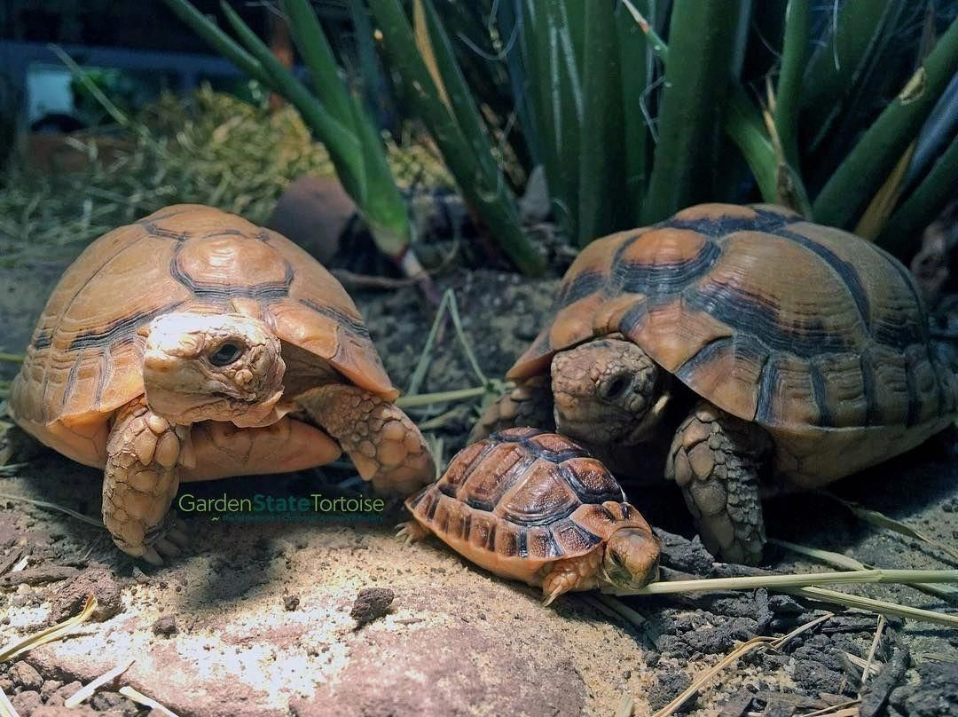 What To Feed Your Tortoise To Keep Them Healthy