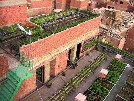 Amazing Rooftop And Vertical Agriculture In Cairo Rooftop Garden Urban Urban Farming Urban Agriculture