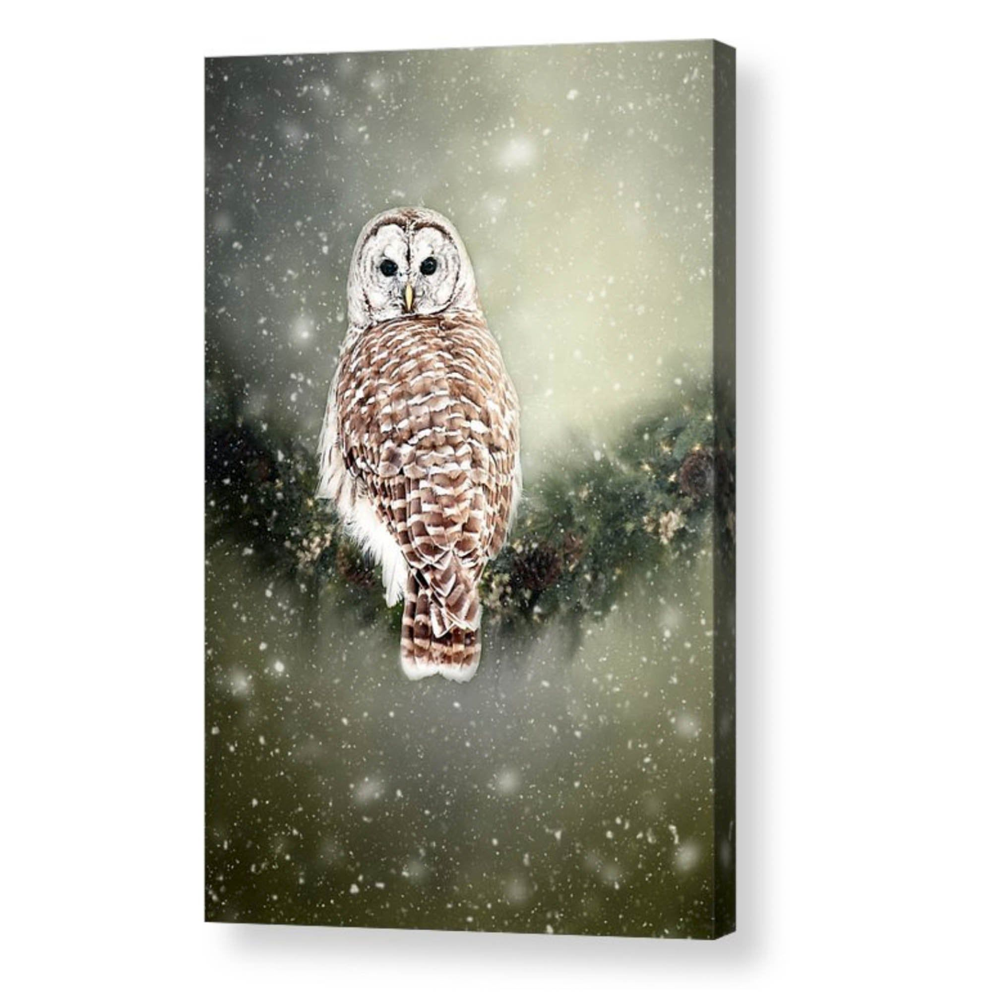 Barred Owl Snow Winter Photo Wrap Wall Art Wildlife Wall Etsy Owl Photography Art Owl Wall Art