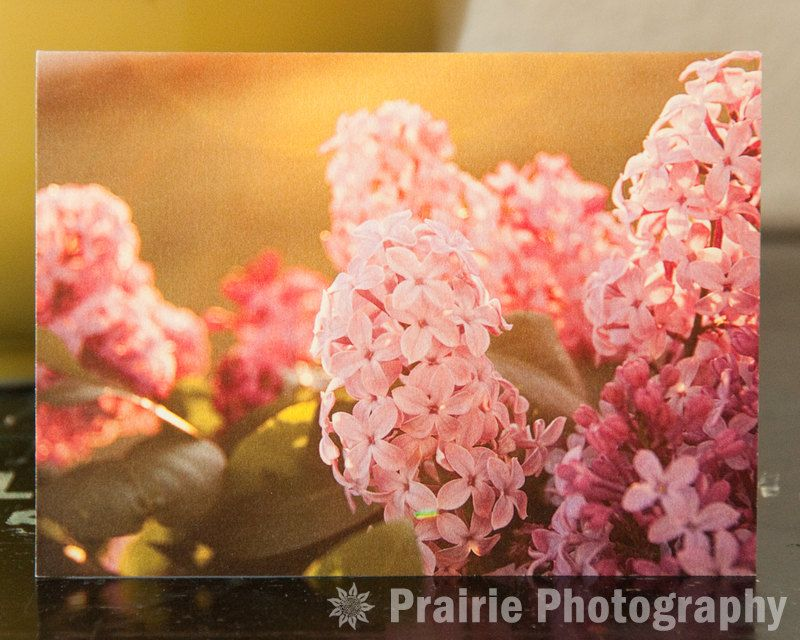 Lilac Blooms in Sunset Glow Notecard (PP002SNC). $3.75, via Etsy.