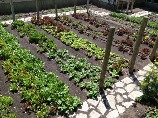 Early Spring Vegetable Garden Images Google Search 400 x 300