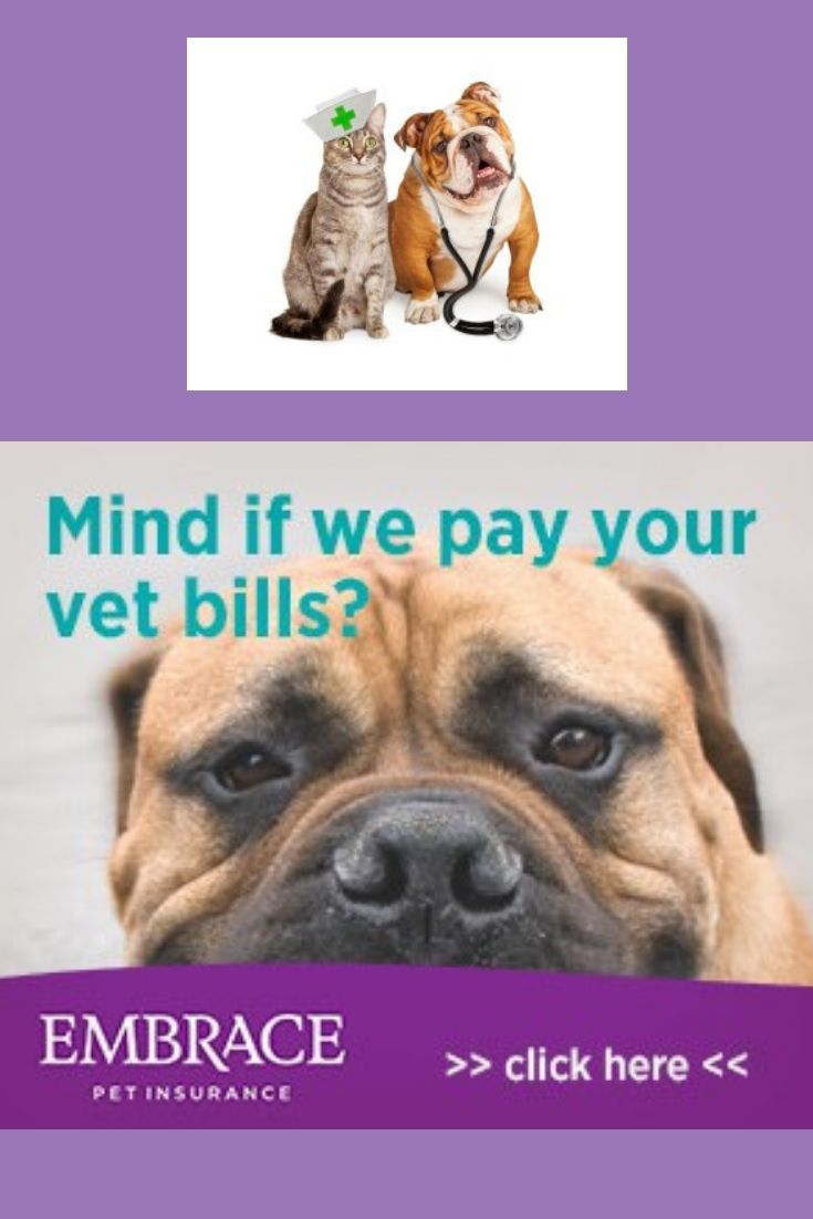 Can we pay your vet bills pet insurance reviews