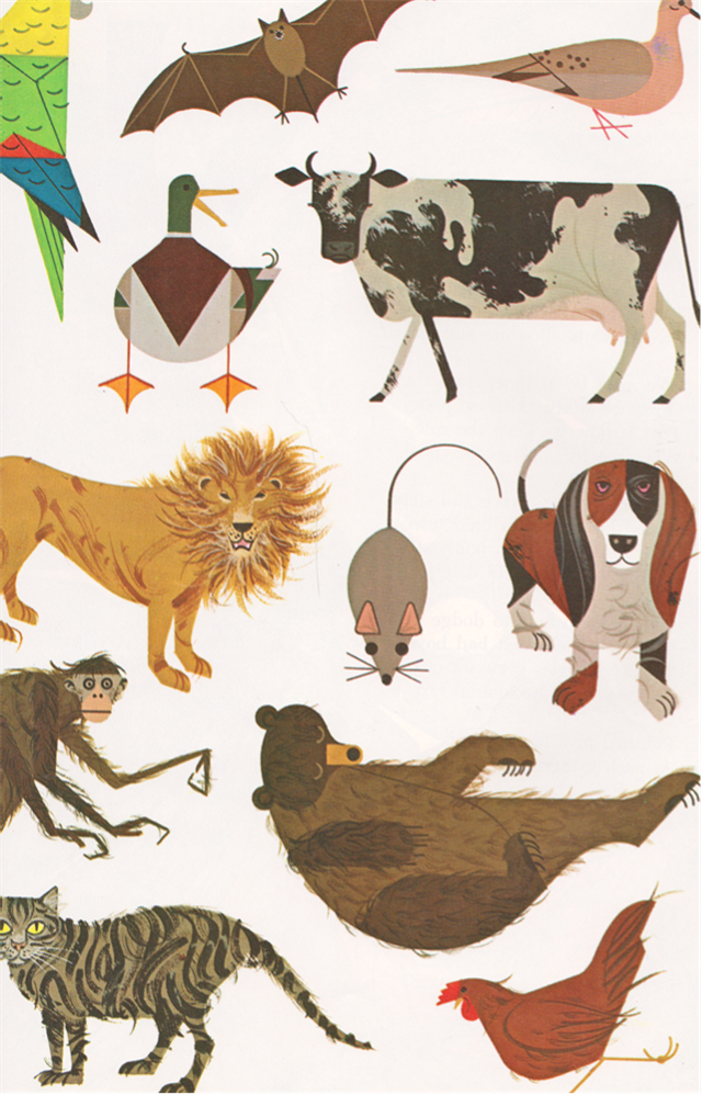 Charley Harper   동물   Pinterest   Ilustraciones, Animales y Dibujo