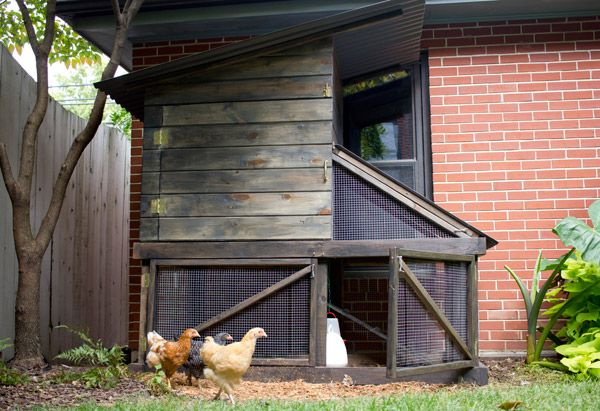 diy urban backyard chicken coop made from tongue and groove including rough materials list