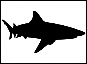 image about Shark Stencil Printable identified as Printable Stencils Shark Free of charge Printable Stencils Shark