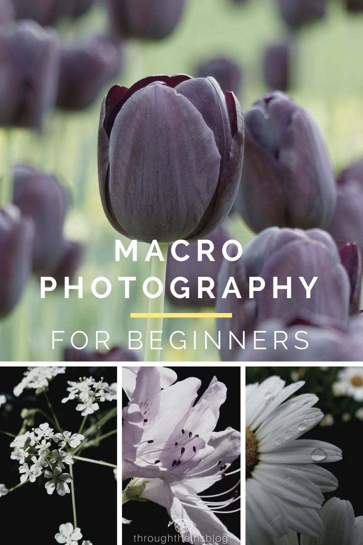 10 Macro Photography Tips For Beginners Easy Steps To Take Your The Next Level