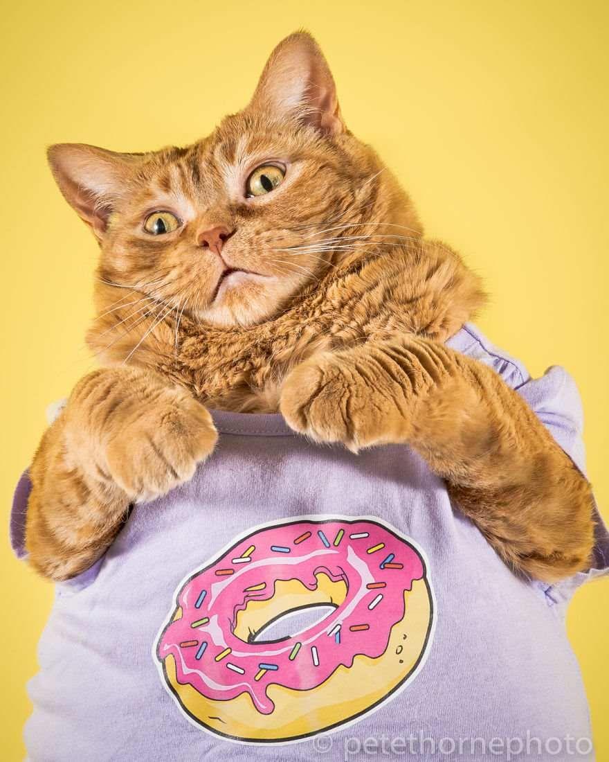 Картинки прикольных котов жирных, китти