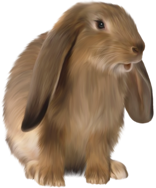 Cute Brown Bunny Png Picture Rabbit Cartoon Images Animals Rabbit Png