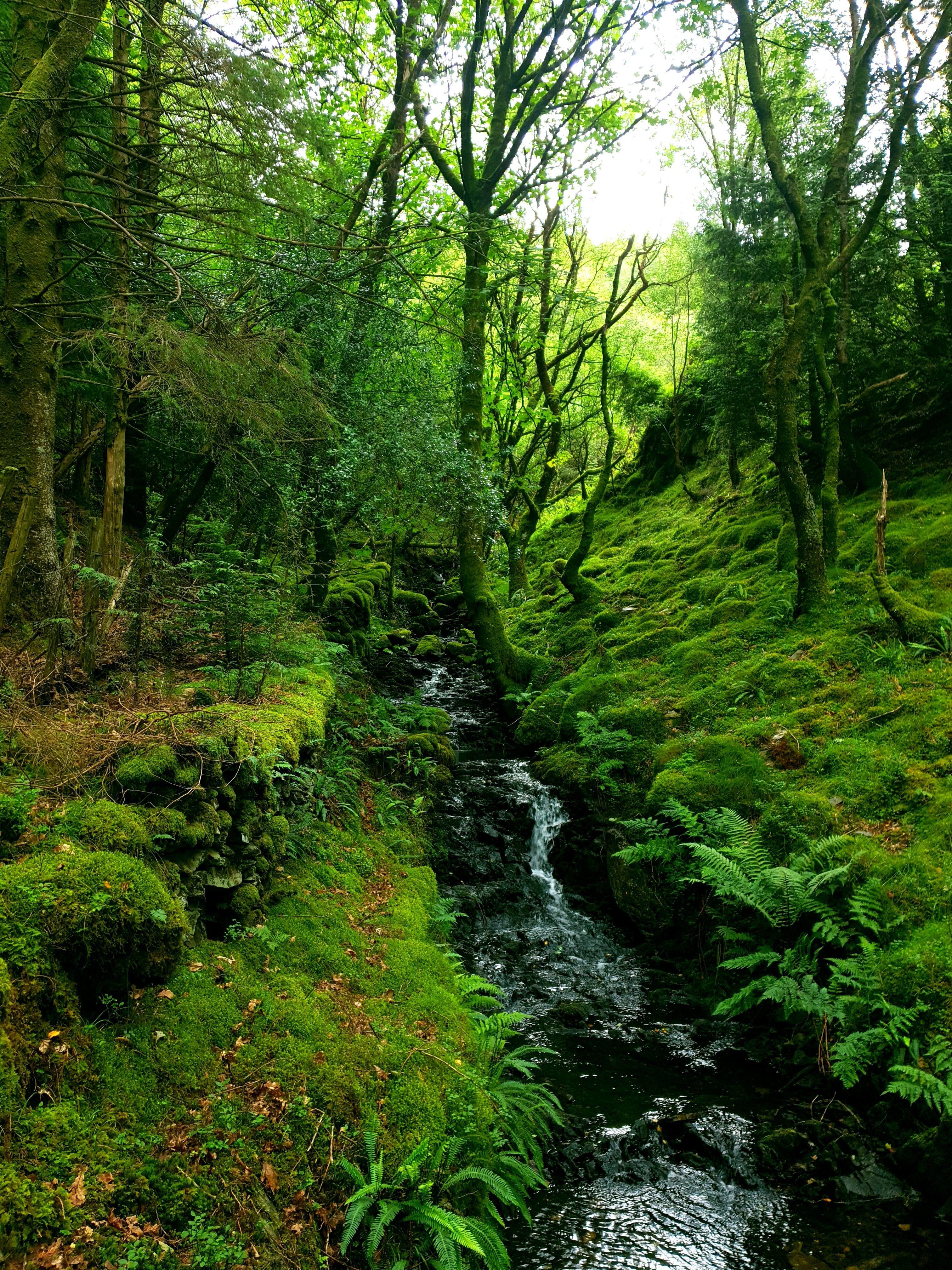 Llanfachreth North Wales [OC] 3024x4032