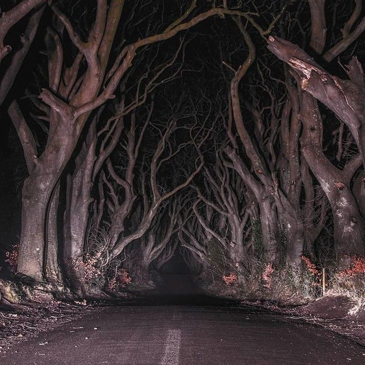 """Atlas Obscura on Instagram: """"The atmospheric road was never meant to be so creepy. Planted in the 18th century by the Stuart family, the opposing rows of beech trees…"""" #pictureplacemeant"""