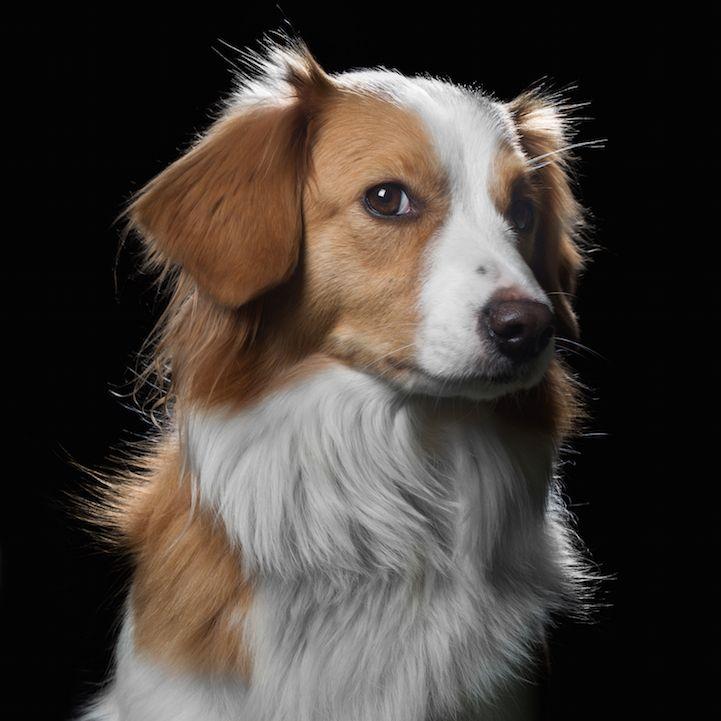Íntimas Animal Portraits Capture Peculiaridades únicos y personalidades de gatos, perros y caballos - Mi Modern Met