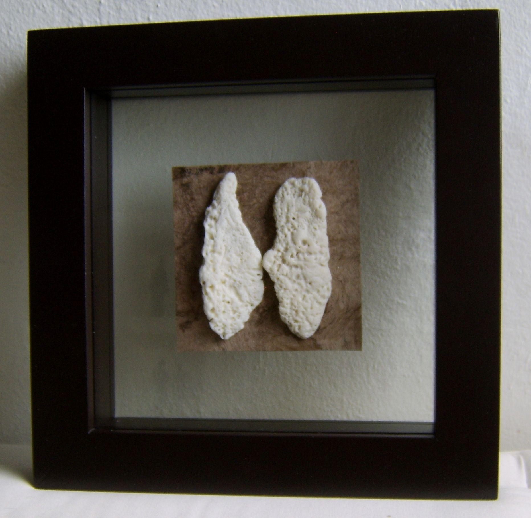 mariposa de caracoles rotos en marco de madera y doble vidrio ...