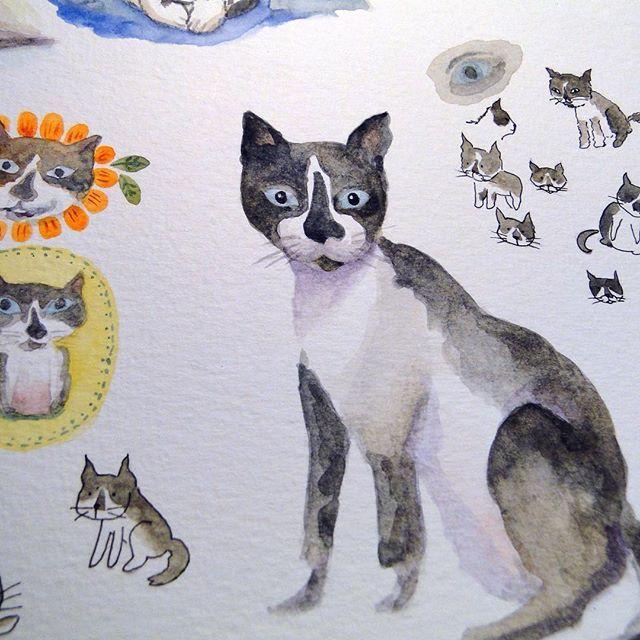 Miau Too many cats this week Hehehe