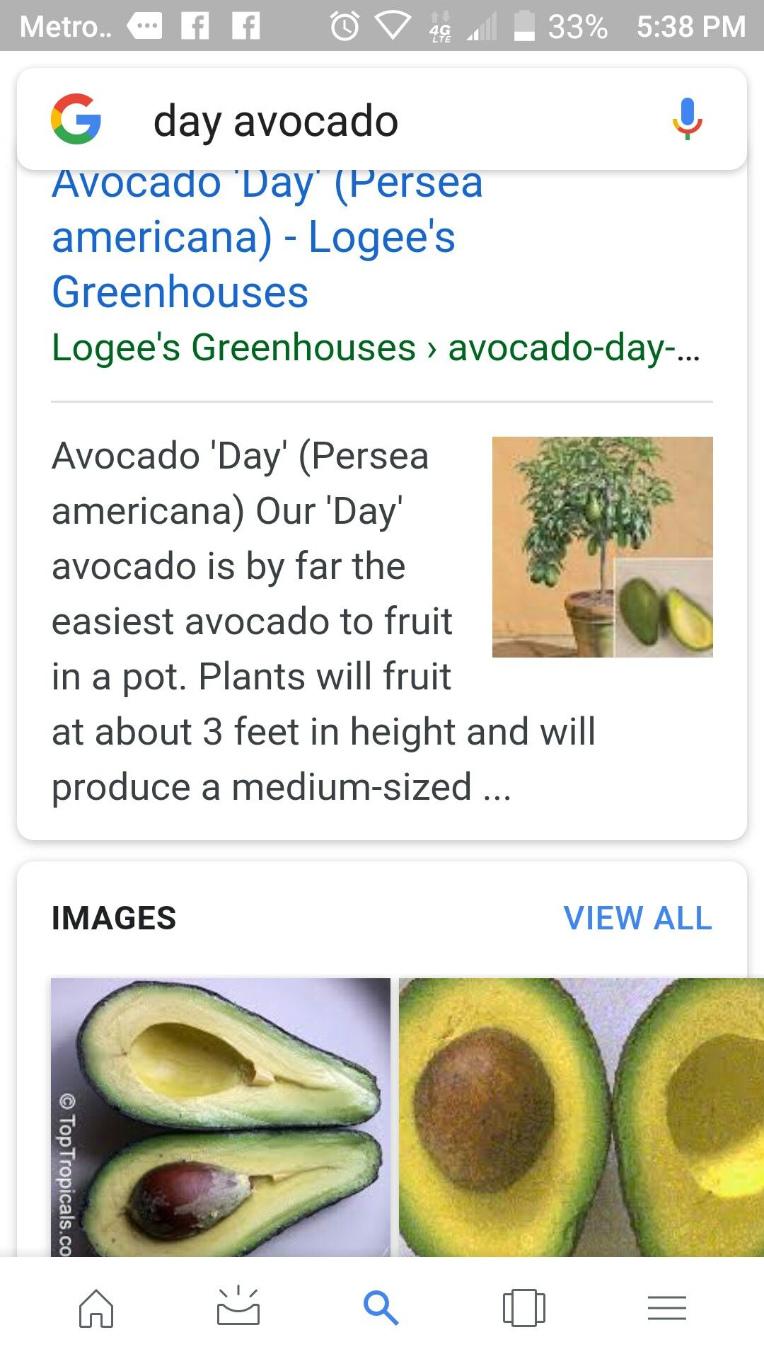 Day Avocado Tree Avocado, Avocado tree, Fruit