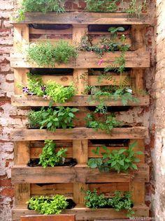 Vertikales Gärtnern: bepflanzte Paletten – berlingarten
