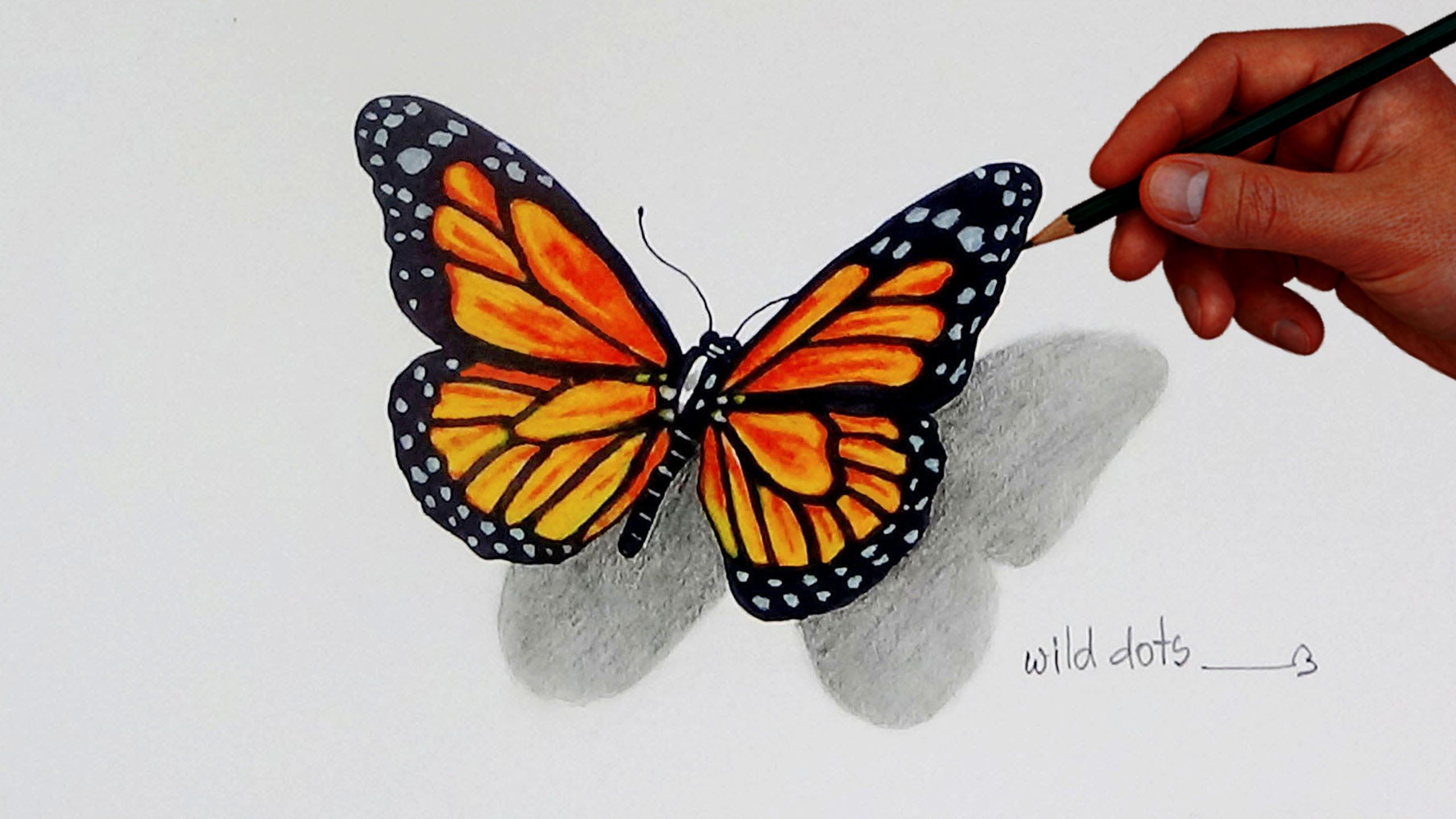 How To Draw A Butterfly Simple And Easy Steps Butterfly Drawing Butterfly Sketch Easy Butterfly Drawing